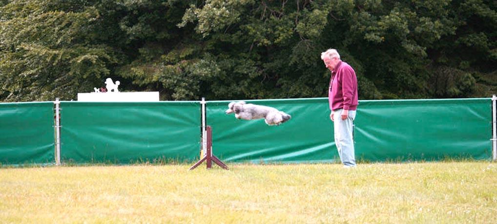 Turnierhund Leon